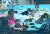 fishgoround2.jpg